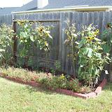 Gardening 2009 - 101_5105.JPG
