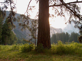 Sentinel Meadow at dawn