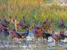 wildlife-birds-4.jpg
