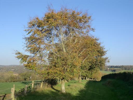 CIMG5308 Towards Lodgefield Farm (autumn)