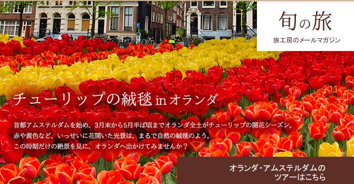 チューリップの絨毯 in オランダ