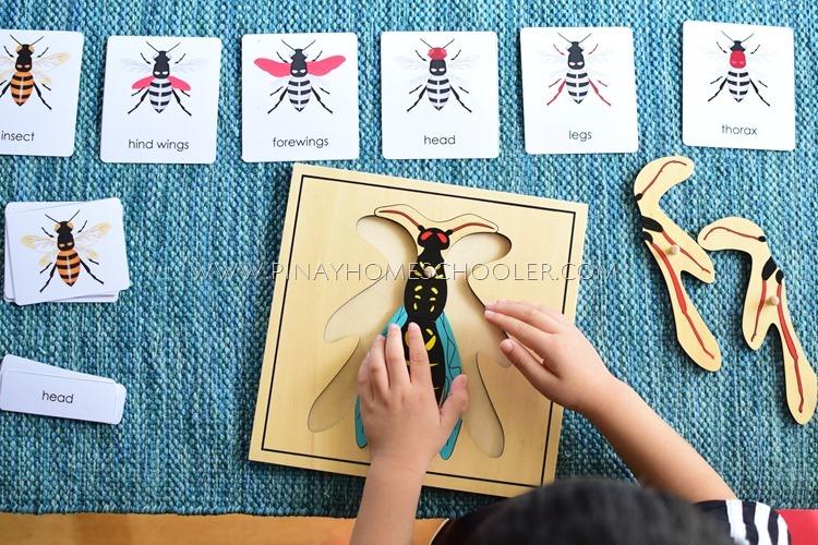 Montessori Wasp Puzzle