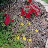 Gardening 2012 - 115_1429.JPG