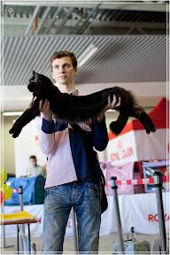 cats-show-25-03-2012-fife-spb-www.coonplanet.ru-020.jpg