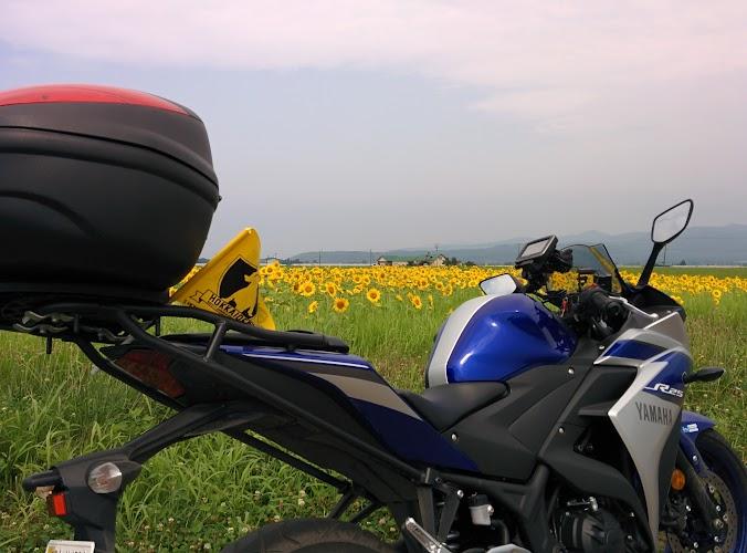 ひまわり畑とバイク