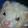 liliana perri's profile photo