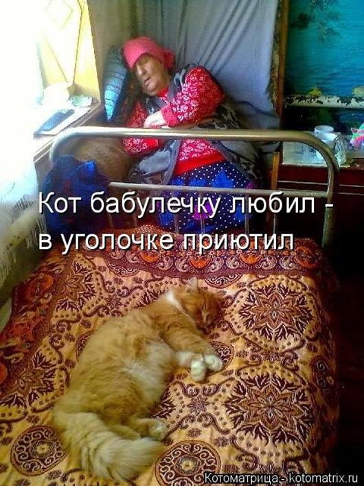 1411716307_kotomatricy-32