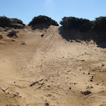small sand dunes that litter the cape bailey walk (75552)