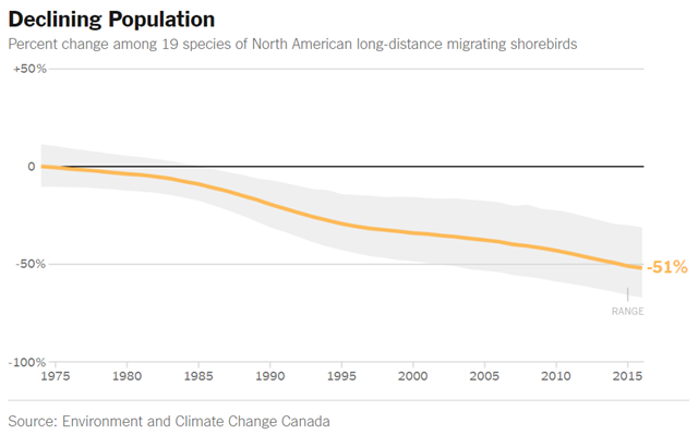 Percent change in population among 19 species of North American long-distance migrating shorebirds, 1975-2016 Graphic: The New York Times / Environment and Climate Change Canada