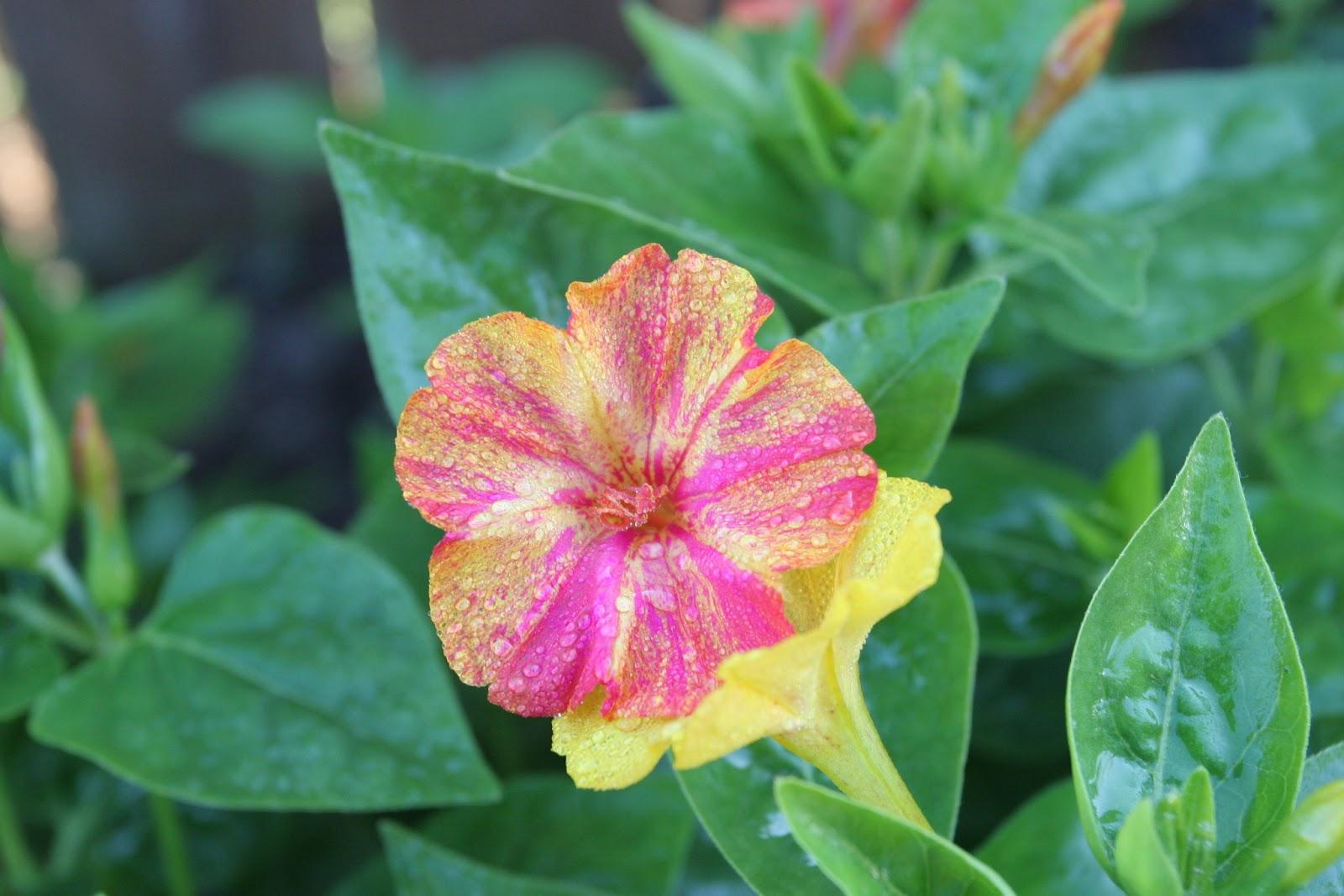 Gardening 2012 - IMG_2945.JPG