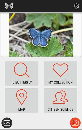 Butterflies of Kyrgyzstan