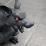 our hallway rat in Etobicoke, Ontario, Canada