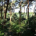Forêt depuis la tour de Samois