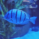 Downtown Aquarium - 116_3856.JPG