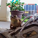 Gardening 2014 - 116_3018.JPG