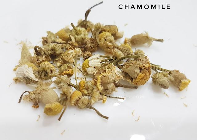 Manfaat dan Khasiat bunga chamomile