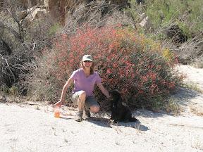 Linda and Pepper framed by a large Chuparosa bush