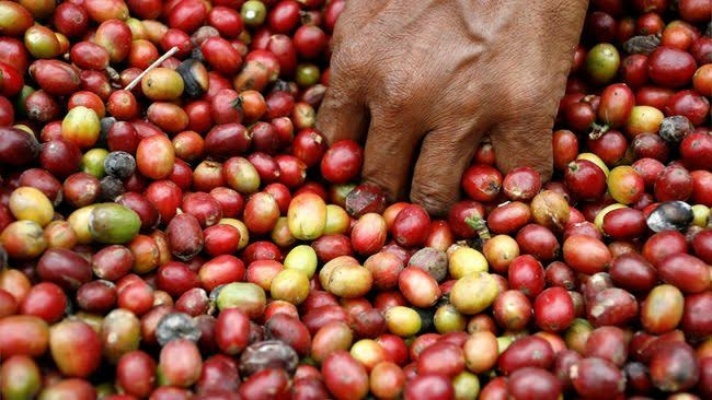 5 Indonesian Best Coffee You Might have to Taste