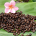 Buy Kona Beans For A Healthy Cup Of Coffee