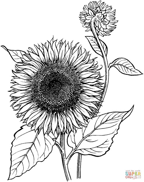 Blooming Sunflower Coloring Online Super Coloring Within Sunflower Coloring  Pages
