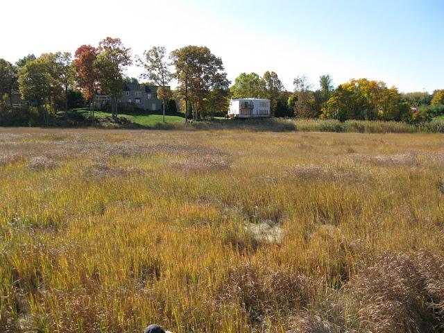 Guilford Salt Meadow Sanctuary Osprey Platform - sfs%252C10-25-09%2Bosprey%2Bplatform%2Binstall%252C122.JPG