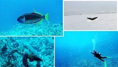 ヨシコさんナオキさんのハワイ島のダイビング
