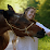 "ROBIN FERNANDEZ ""Vision Equine"" Amaya's profile photo"