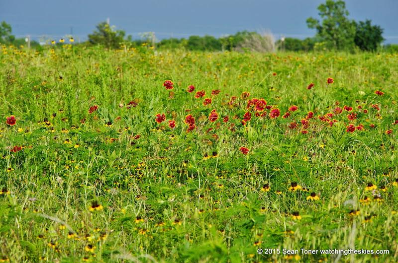 05-26-14 Texas Wildflowers - IMGP1390.JPG