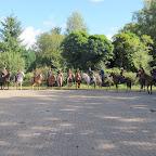 paarden4daagse Zorgvliet 2012 054.jpg