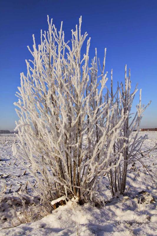 Winter - Winter-014.jpg