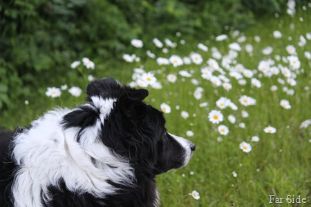 Chance and the daisies
