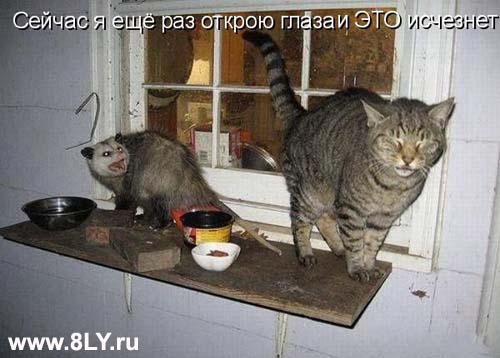 18 05 2013 29+copy - Кошки ))