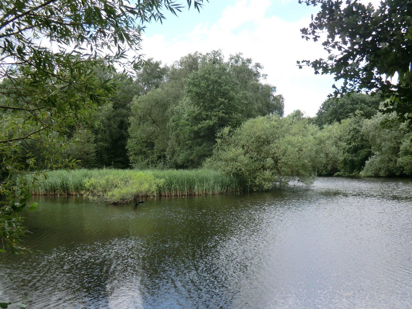 CIMG9160 Bird Sanctuary Pond