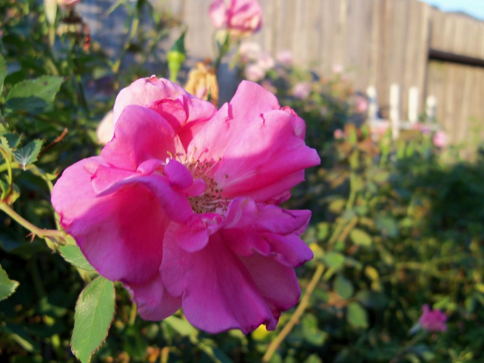 Gardening 2012 - 115_1829.JPG