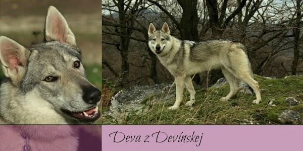 Deva z Devínskej 1.jpg