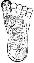 су джок соответствие органов на стопе