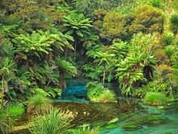 Сказочная река в Новой Зеландии