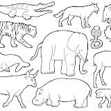 animales-3.jpg
