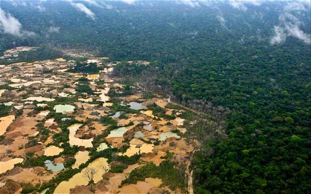 The before-and-after is stark in the Madre de Dios region of the Amazon rainforest in Peru: forest on the left-hand side of this image has been stripped by illegal gold mining. Photo: Miguel Bellido