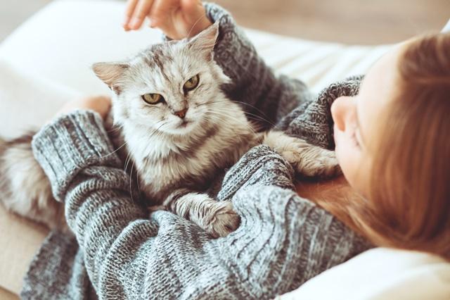 Carinho de gato