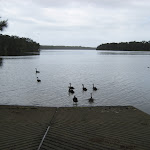 Even the ducks use the boat ramp