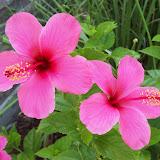 Gardening 2009 - 101_3822.JPG