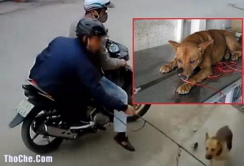 Thơ chế vui Tiên Sư Mấy Thằng Trộm Chó