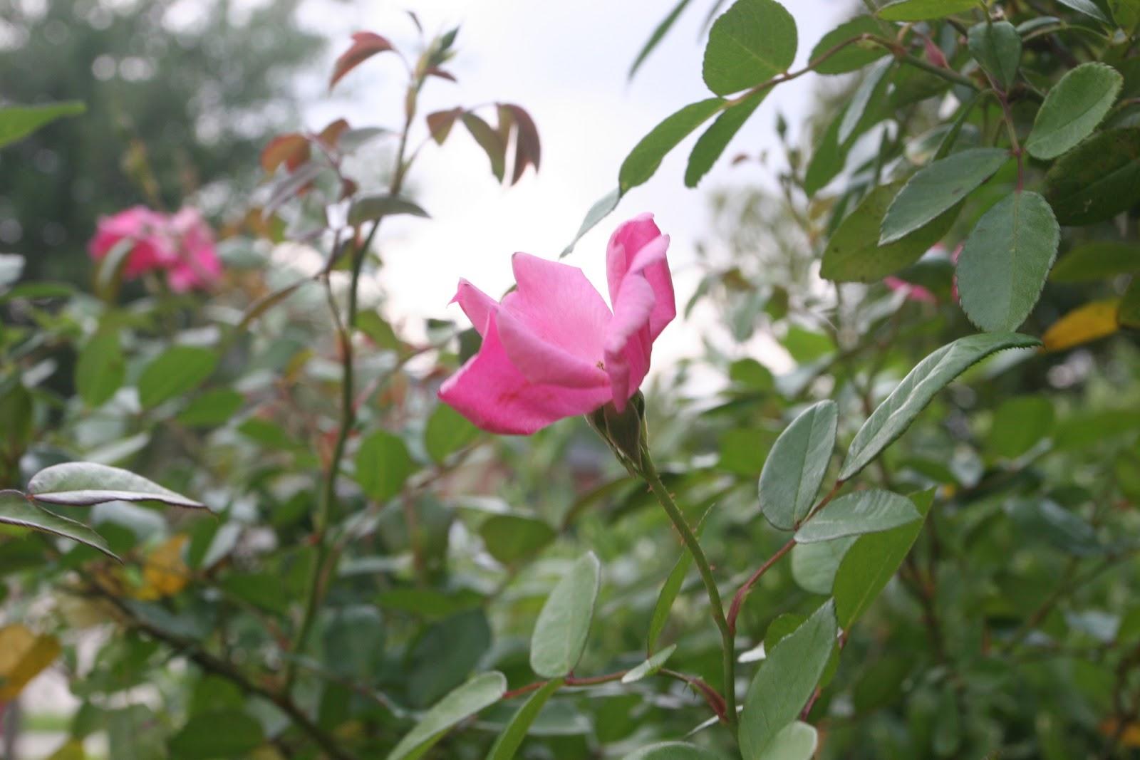 Gardening 2012 - IMG_3356.JPG