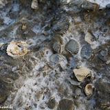 Conchas fossilizadas - Península Valdez, Argentina