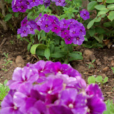 Gardening 2011 - 100_6984.JPG