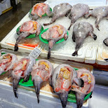 strange fish at the noryangjin fisheries wholesale market in Seoul, Korea in Seoul, Seoul Special City, South Korea