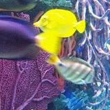 Downtown Aquarium - 116_3936.JPG