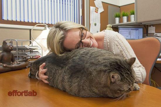 kucing-paling-gemuk-di-dunia