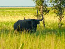 wildlife-water-buffalo-5.jpg